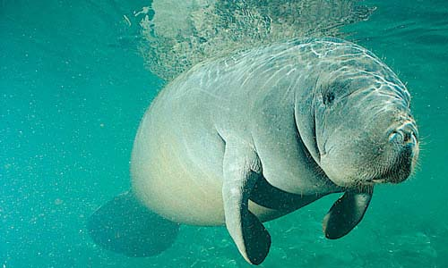 manatee rescue center - The Ultimate Guide to Iquitos for Ayahuasca Travellers