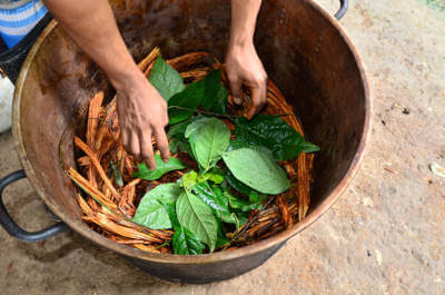 what is ayahuasca.